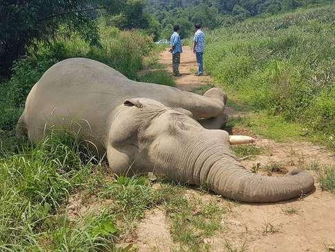 یک فیل مرده در جنگلی در تایلند