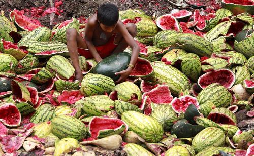 کودک بنگلادشی در حال برداشتن هندوانه از دورریزهای بازار میوه و سبزیجات در شهر داکا