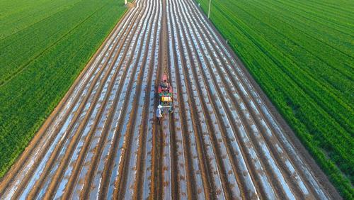 کشت بادام زمینی – چین