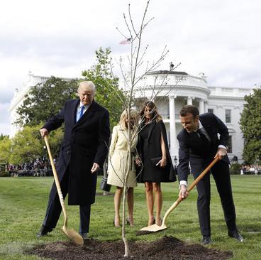 کاشت نهال درخت، به عنوان هدیه نمادین رییس جمهوری و بانوی اول فرانسه به همتای آمریکایی در محوطه جنوبی کاخ سفید در واشنگتن