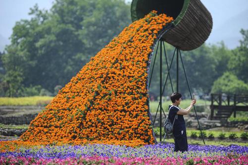 جشنواره گل در هانگژو چین