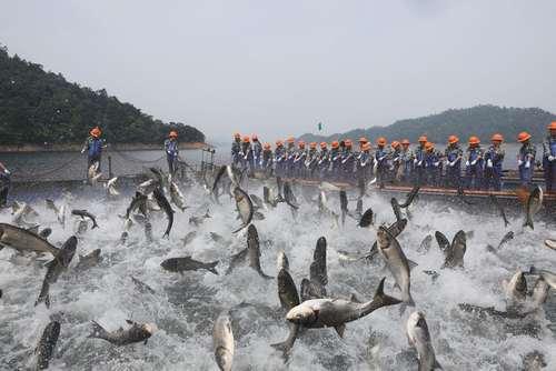 ماهیگیری از دریاچه هزار جزیره چین