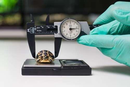 وزن کشی حیوانات باغ وحشی در انگلیس