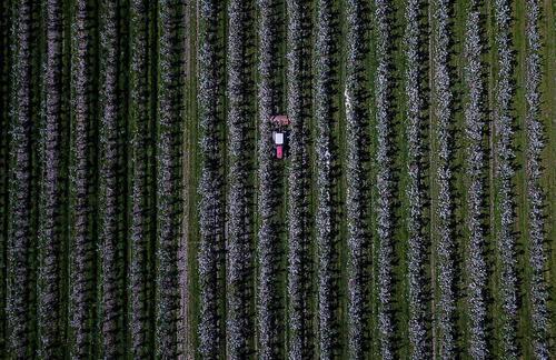 یک باغ سیب – آلمان
