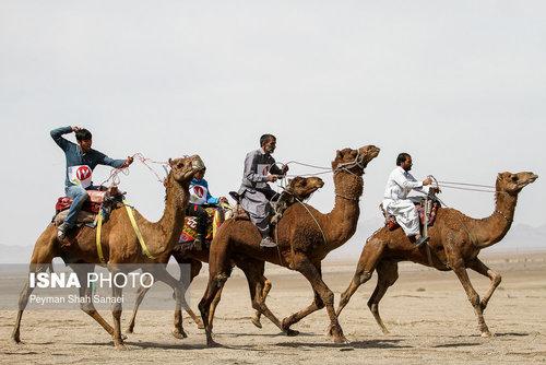 مسابقات شتر سواری قهرمانی کشور