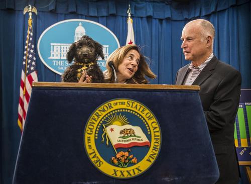 حضور سگ فرماندار ایالت کالیفرنیا در نشست خبری اعلام بودجه سالانه این ایالت