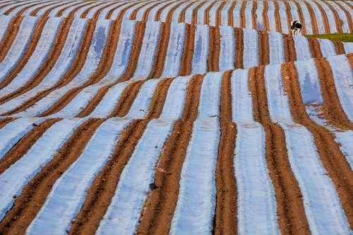 زمین کشاورزی- انگلیس