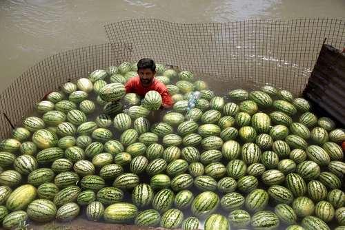 یک هندوانه فروش در جامو هند