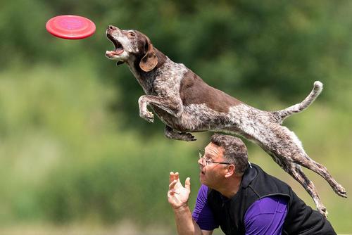 مسابقات سگها/ آلمان