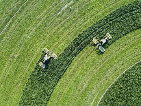 درو ذرت در زمین کشاورزی در پنجاب پاکستان/ عکس روز وب سایت