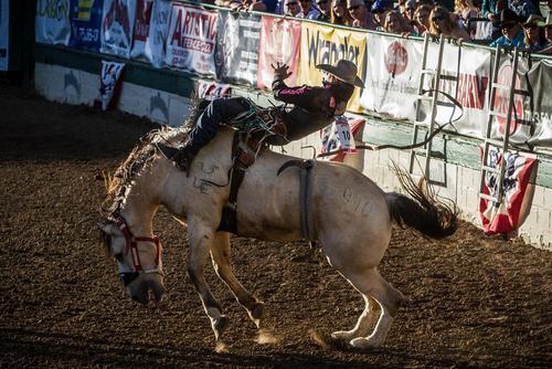 مسابقه سواری گرفتن از اسب وحشی در شهر