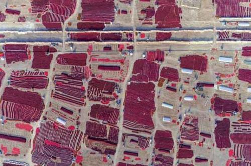 خشک کردن فلفل چیلی در سین کیانگ اویغور