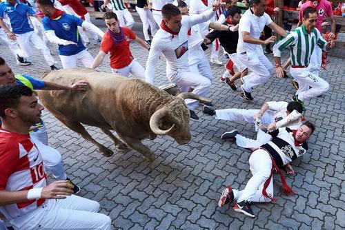 جشنواره سالانه گاو بازی