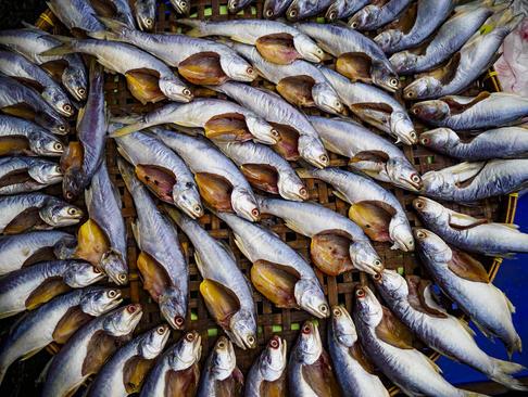 خشک کردن ماهی- تایلند