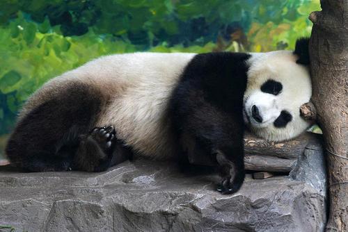 پارک جنگلی شهر نانینگ چین / خبرگزاری شینهوا