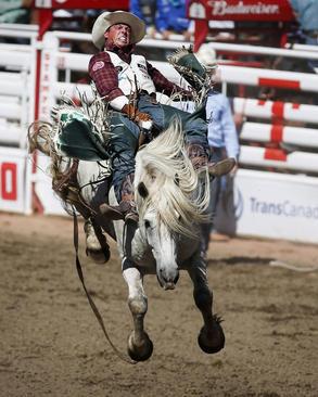 مسابقه سواری گرفتن از اسب وحشی در آلبرتا کانادا