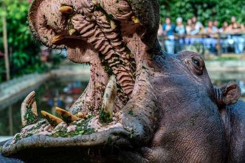 اسب آبی باغ وحشی در شهر مدلین کلمبیا/ خبرگزاری فرانسه