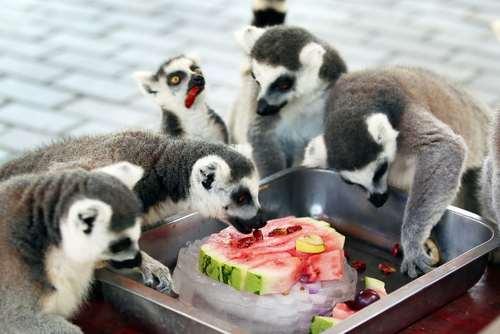 هندوانه خوری در گرمای تابستان در باغ وحش چانگژو چین/ رویترز