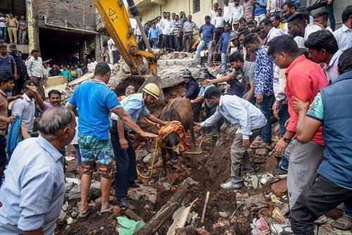 نجات یک گاو از آوار ریزش یک ساختمان/ هندوستان