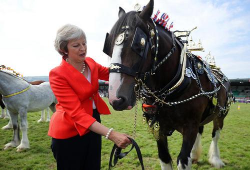 نخست وزیر بریتانیا در جریان بازدید از نمایشگاه سلطنتی کشاورزی