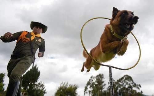 یک مرکز آموزش و تربیت سگ در کلمبیا/ خبرگزاری فرانسه