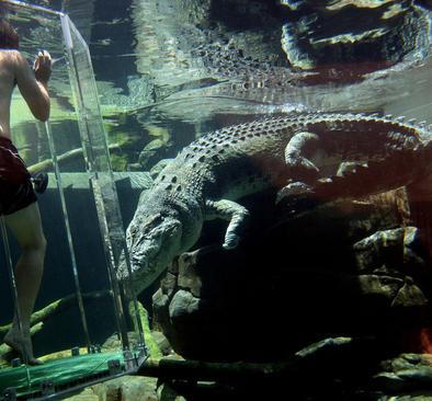 آکواریوم «قفس مرگ» در پارک Crocosaurus Cove - شهر داروین، استرالیا