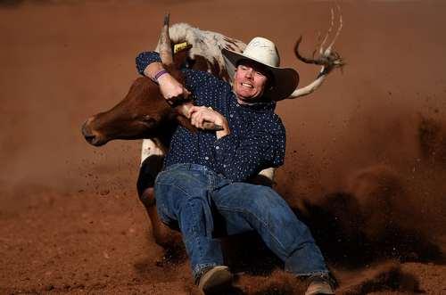 مسابقات کشتی با گاو در استرالیا