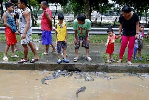 ماهیها در کانالهای شهری پس از توفان در شهر ماریکینا فیلیپین/ آسوشیتدپرس