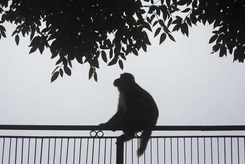 شهر دارامشالا هندوستان/آسوشیتدپرس