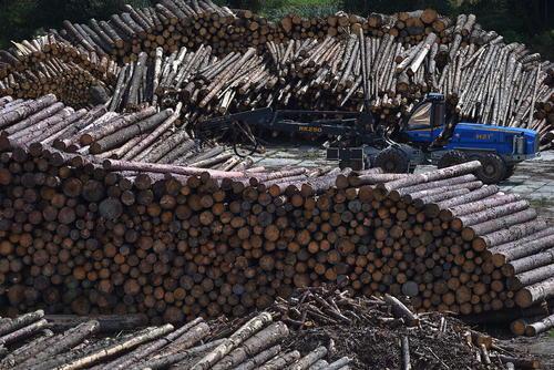 درختان بریده شده از جنگل در انبار چوبی در جمهوری چک