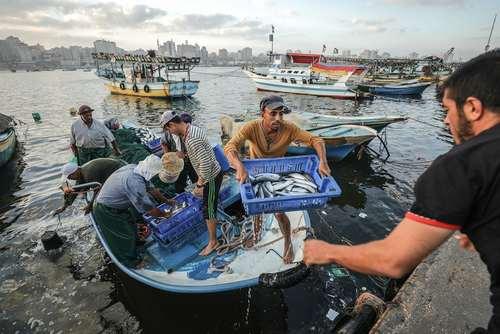 صید بیشتر ماهیگیران غزهای پس از  تغییر دادن محدودیت 3 مایلی از ساحل برای ماهیگیران فلسطینی به 9 مایل از سوی اسراییل / خبرگزاری آناتولی