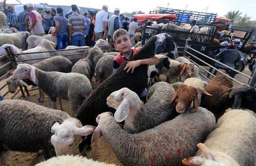 بازار فروش احشام عید قربان در باریکه غزه و کابل افغانستان/ رویترز