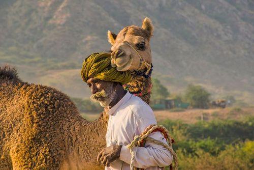 نمایشگاه شتر در پوشکار هند/ عکس روز وب سایت