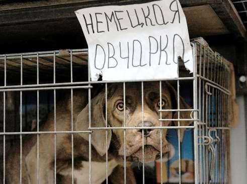 یک مرکز فروش سگهای خانگی در شهر مسکو/ ایتارتاس