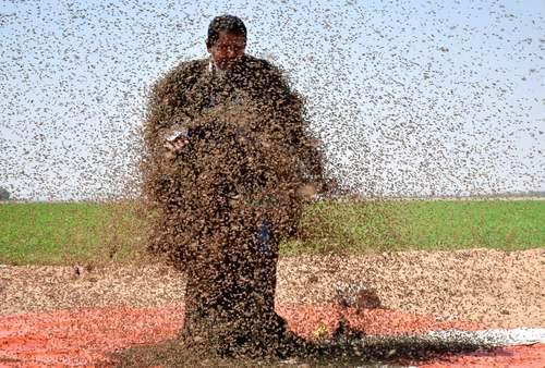 پوشاندن بدن یک مرد سعودی با زنبور/ رویترز