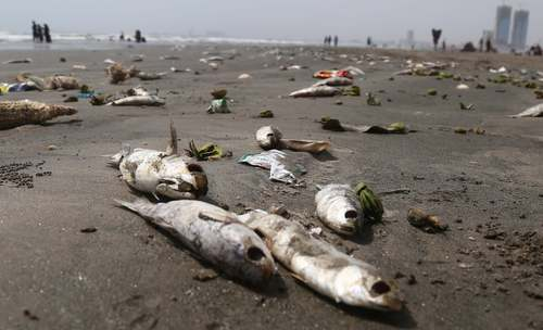 هزاران ماهی تلف شده در ساحل کراچی پاکستان به دلیل آلودگی آب/ EPA