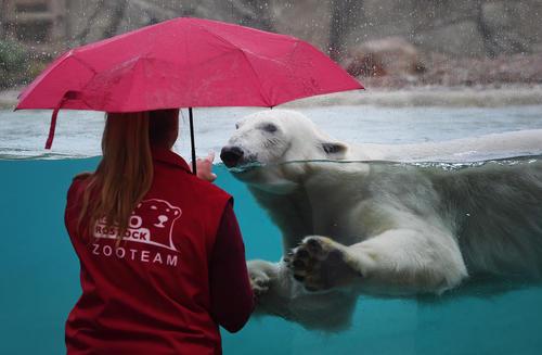 باغ وحش شهر روستوک در آلمان/ خبرگزاری آلمان