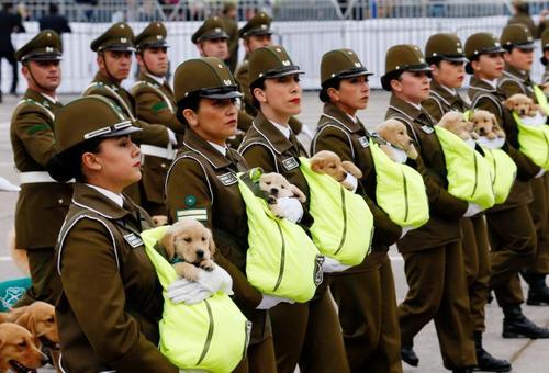 رژه پلیس شیلی با سگهای آینده پلیس در یک مراسم رژه نظامی/ رویترز