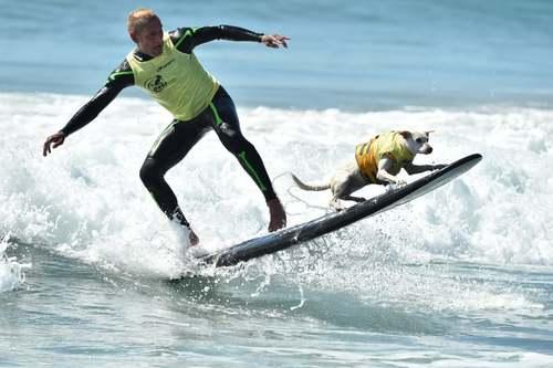 دهمین دوره مسابقات موجسواری سگها در ساحل هانتینگتون در ایالت کالیفرنیا آمریکا