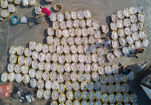 ماهیان تازه صید شده در شهر بندری