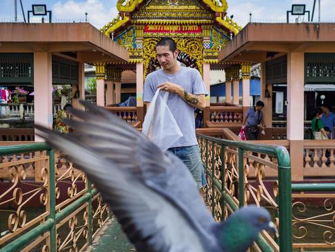 ممنوع شدن غذا دادن به پرندگان در بانکوک تایلند به دلیل برنامه دولت برای کنترل جمعیت پرندهها