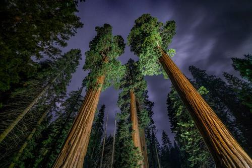 جنگلهای کالیفرنیا آمریکا/ عکس روز وب سایت