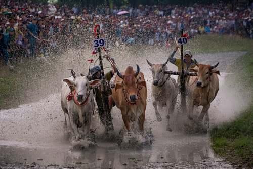 مسابقات سنتی گاورانی در ویتنام