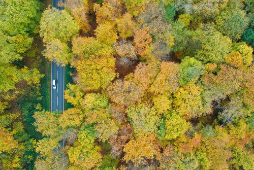 جادهای جنگلی در ساکسونی آلمان/ خبرگزاری آلمان