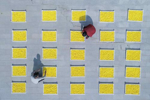 خشک کردن گل از سوی کشاورزان چینی/ شینهوا