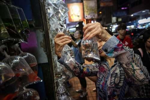 فروش ماهیان تزیینی و کوچک در بازاری در هنگ کنگ