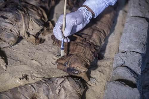 گربه های مومیایی شده در مقبره جدید کشف شده فراعنه در مصر/ خبرگزاری فرانسه