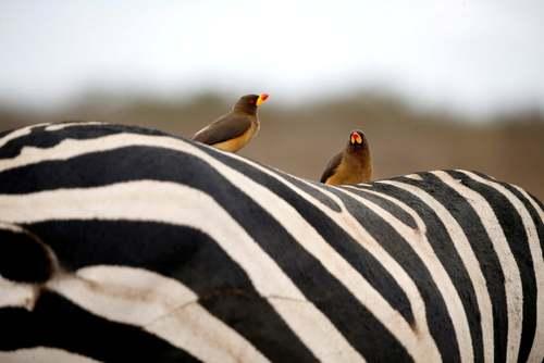 پارک ملی نایروبی کنیا / رویترز