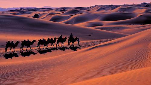 عبور کاروان شترها از صحرایی در شمالغرب چین