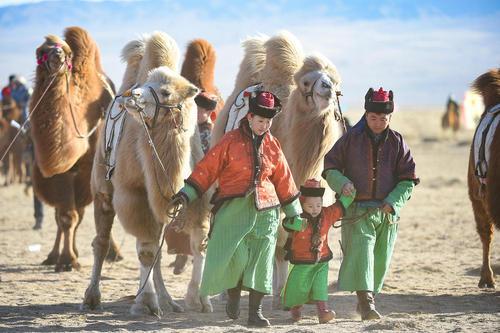 جشنواره شتر در بخش مغولنشین در شمال چین / شینهوا